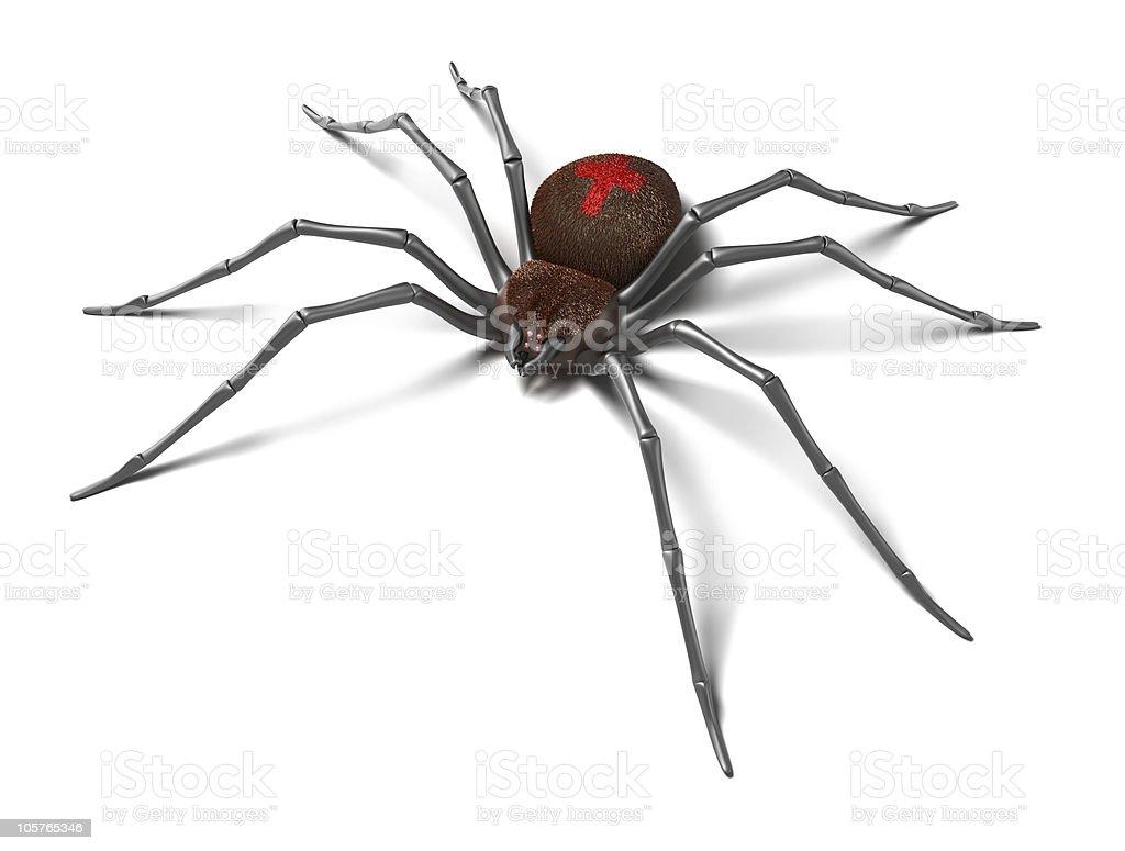 Spider : Black Widow stock photo