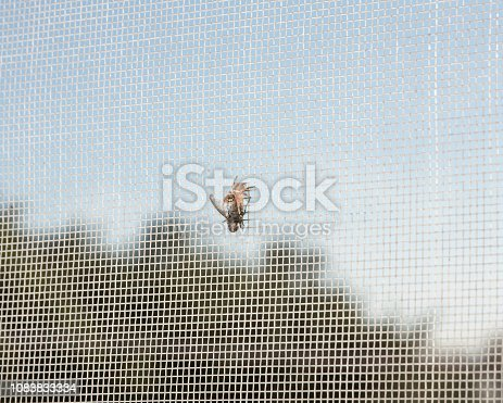 Not the usual spider web: a spider has a fly as its prey on a mosquito net. Copy space on the sky