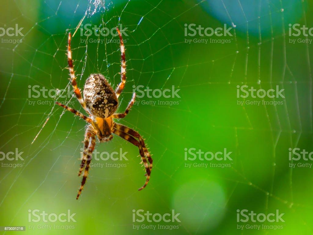 Aranha close-up sobre um fundo verde. - foto de acervo