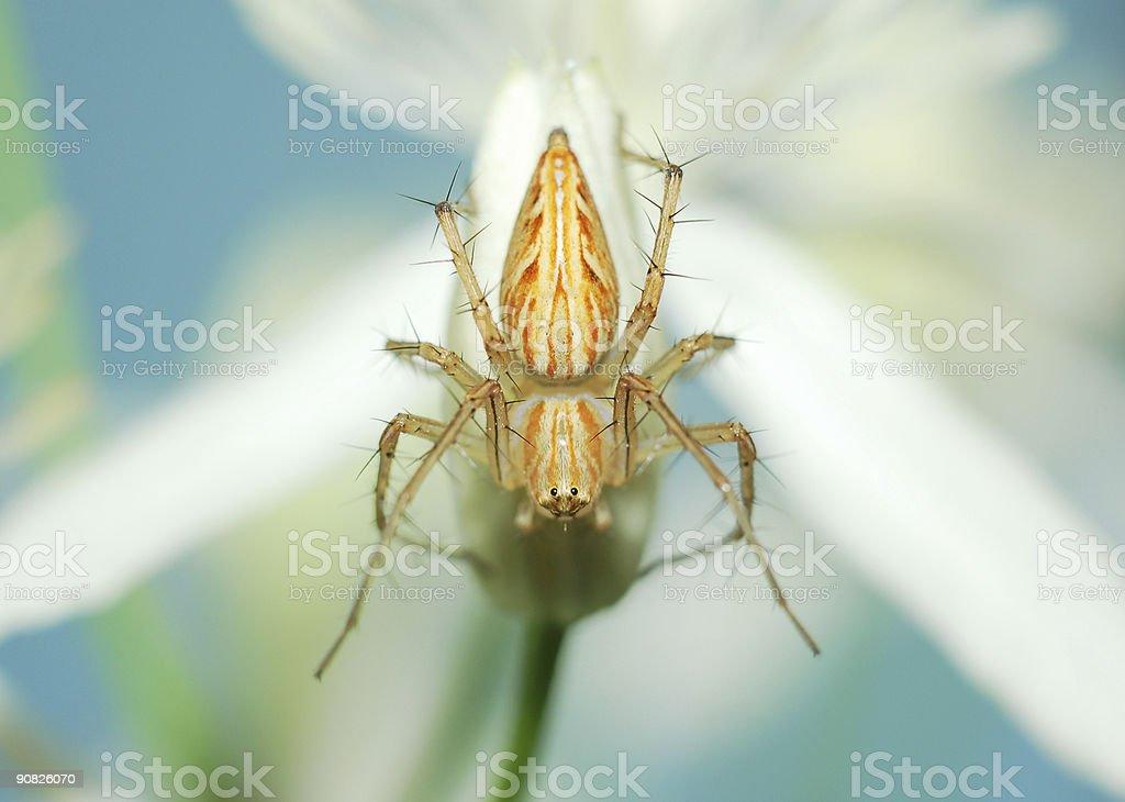 Spider, Nahaufnahme – Foto