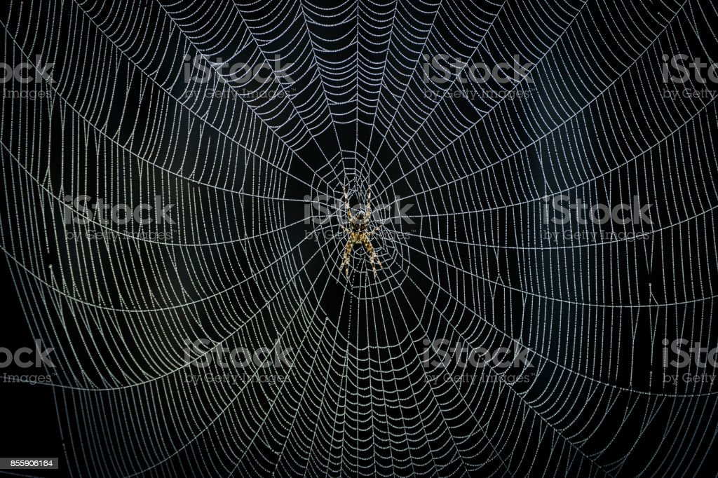 Spider creating it's Web stock photo
