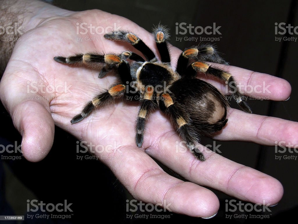 Spider for you .... royalty-free stock photo