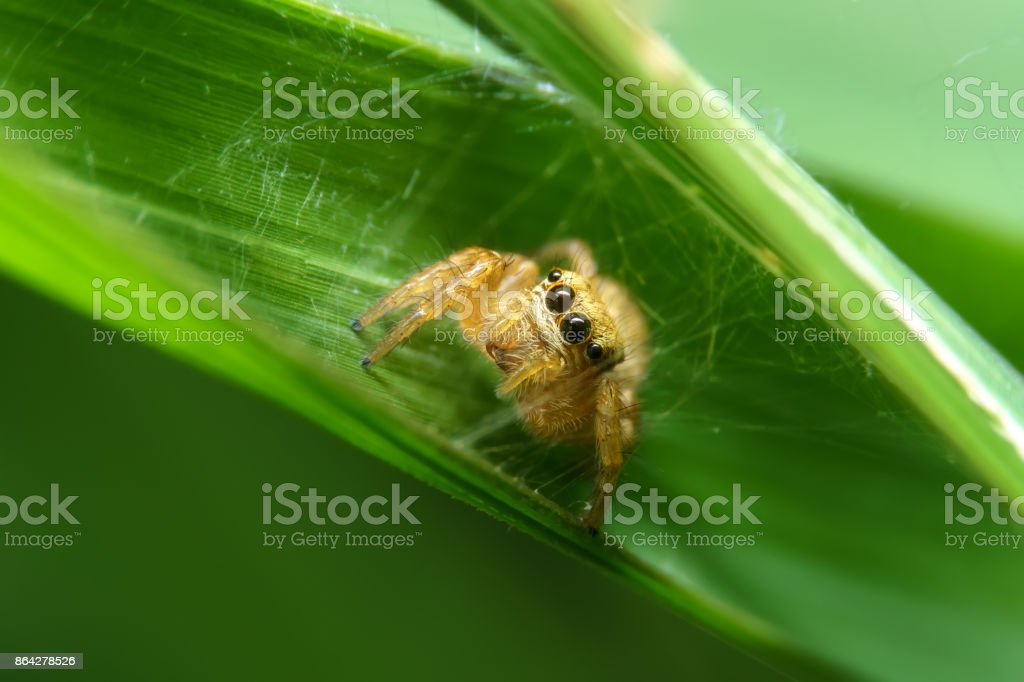 Spider in green leaf stock photo