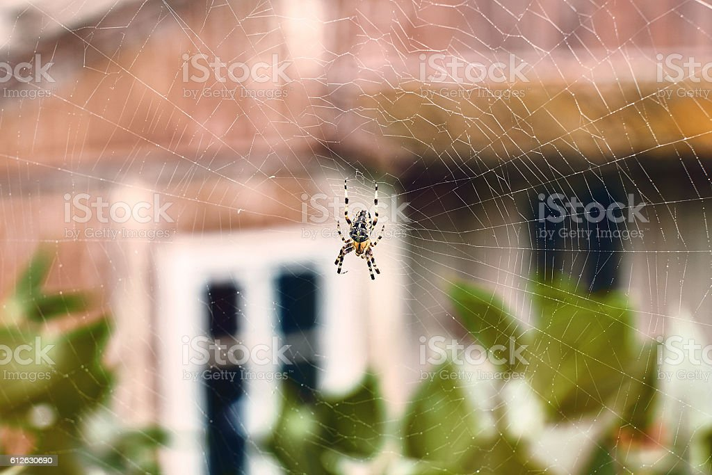 Spider in his cobweb stock photo