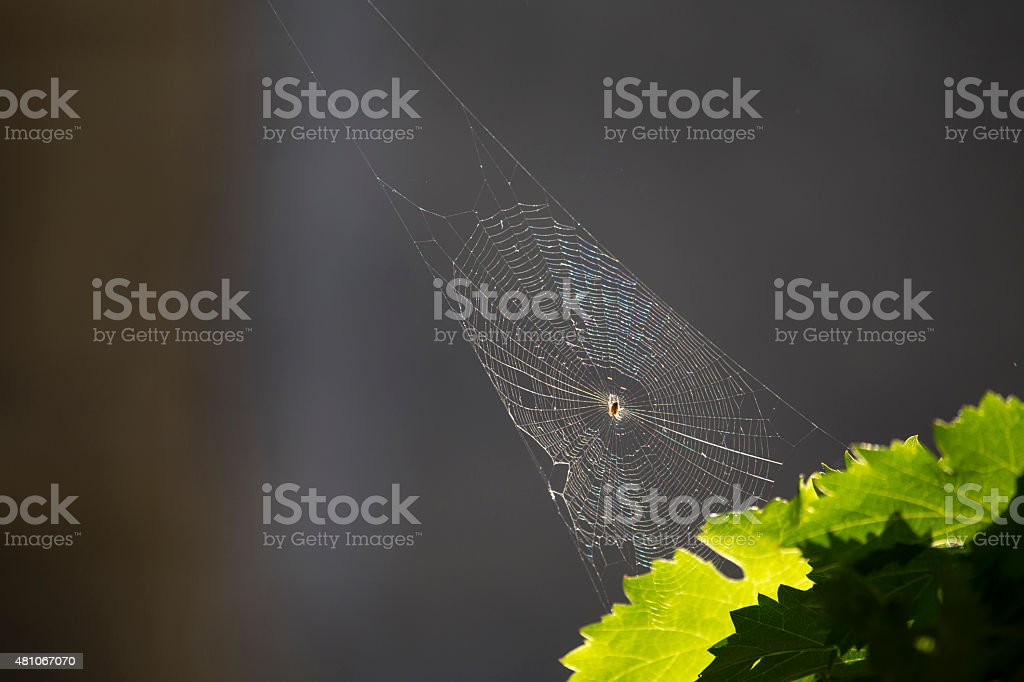 Spider in its irridescent web stock photo