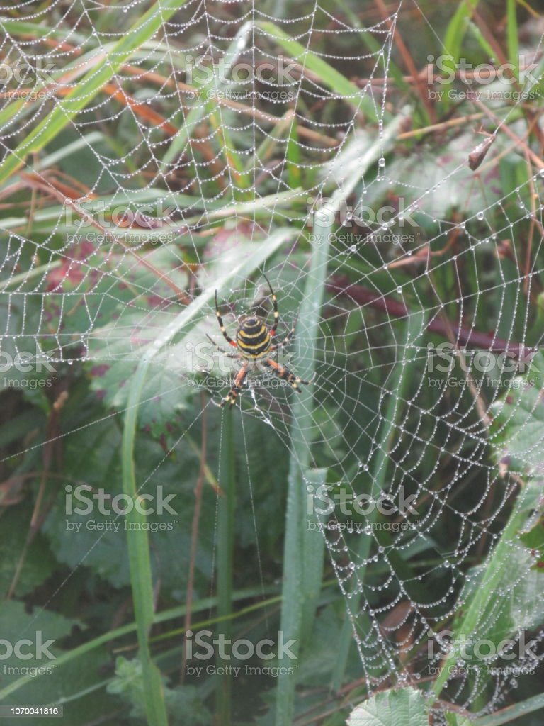 Spider in its web stock photo