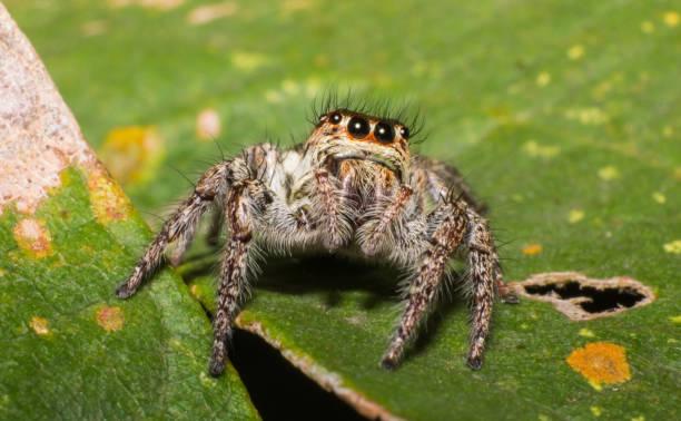aranha no modo macro, inseto na natureza - foto de acervo