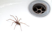 Spider trapped in the bath