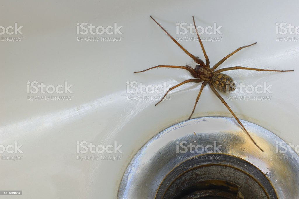 Spider in the bath stock photo