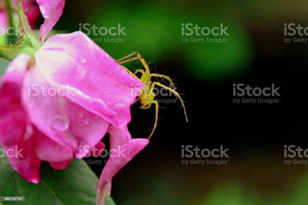 Aranha de Jardim - foto de acervo