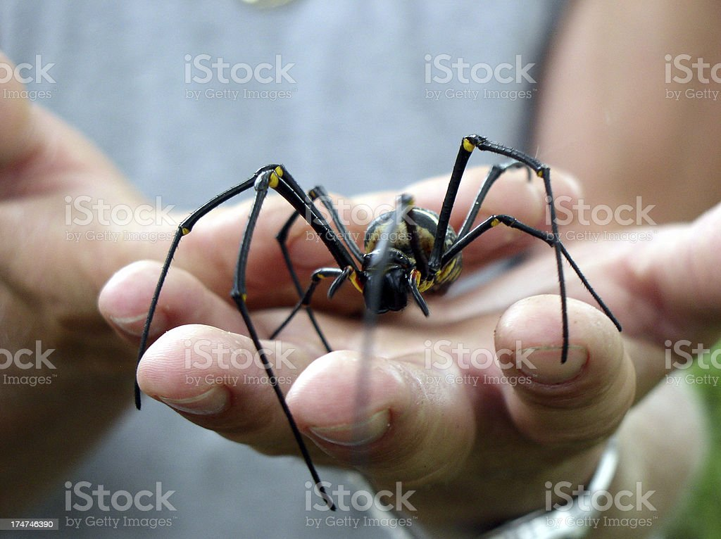 Spider in the hand of a man stock photo