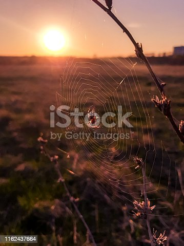 Spider sitting in the web at the sunset
