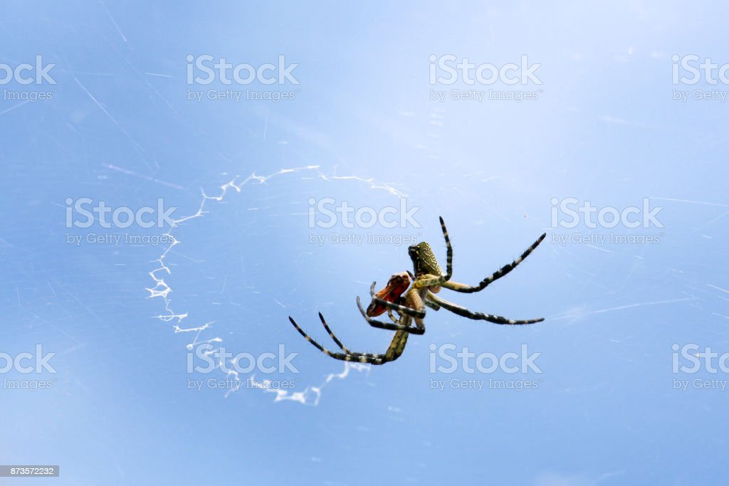 Aranha na teia. stock photo