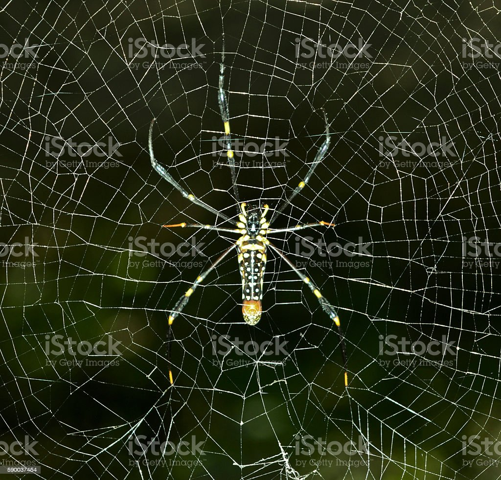 Spider is living at her safe home stock photo