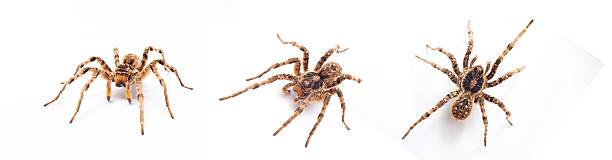 Aranha isolado - foto de acervo