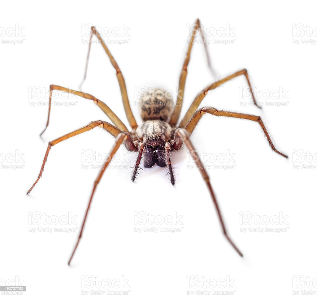 Spider isolated stock photo