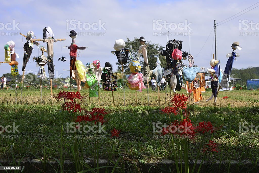 Spider Lily and Scarecrows stock photo