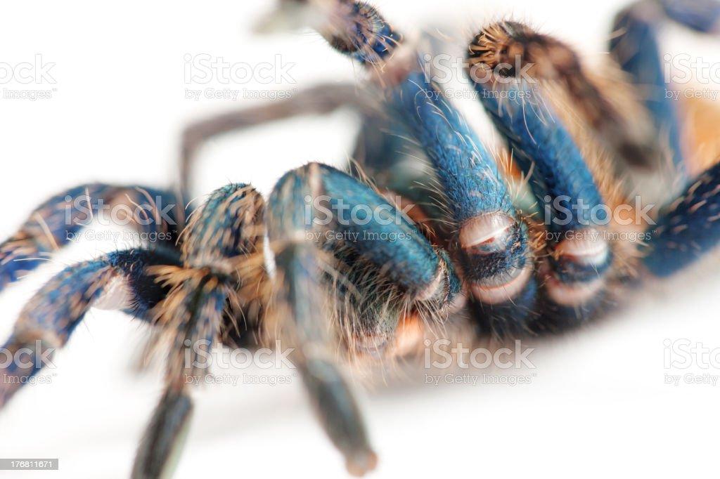 Araña de movimiento - foto de stock