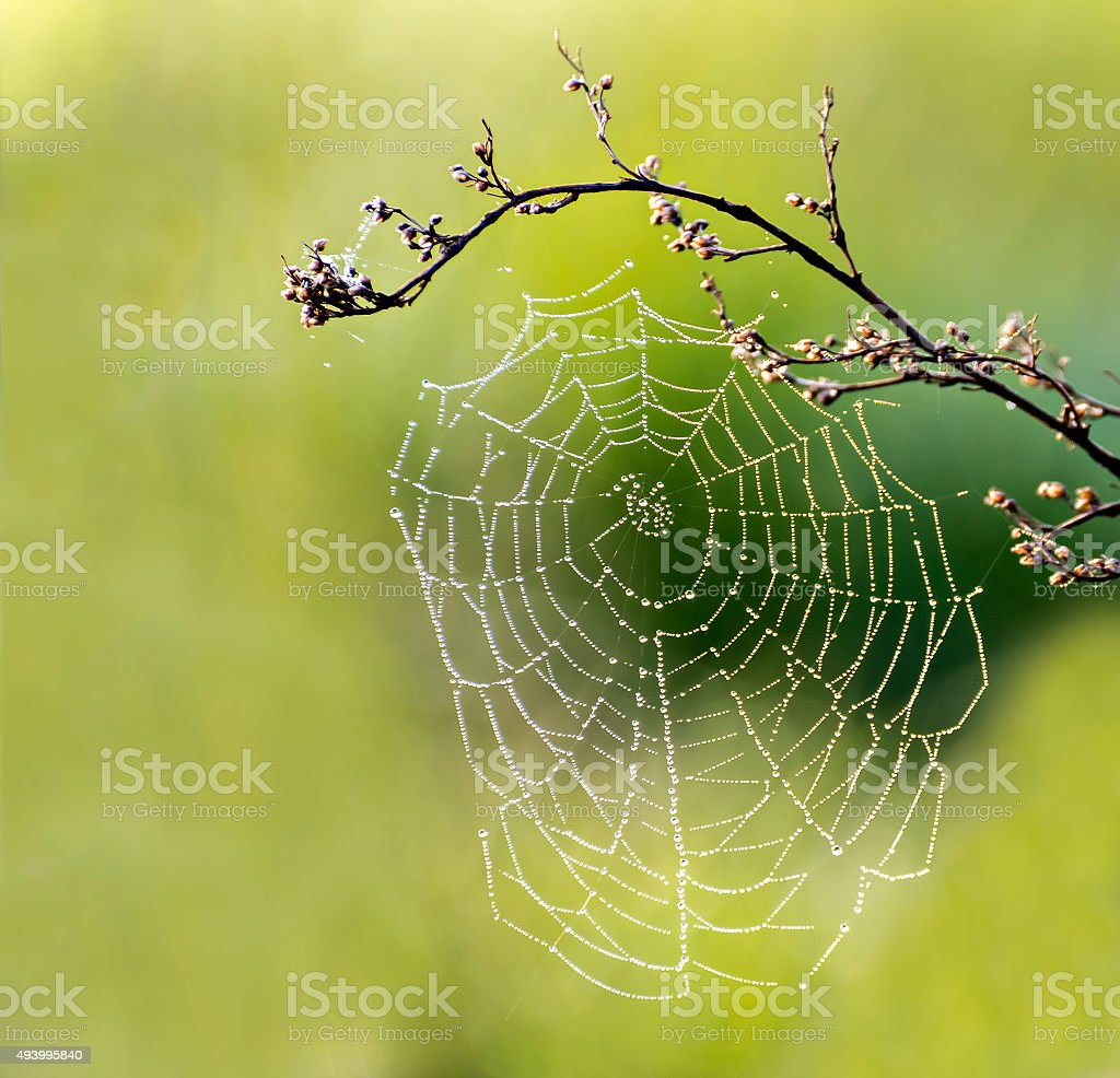 Spider net at the early morning stock photo