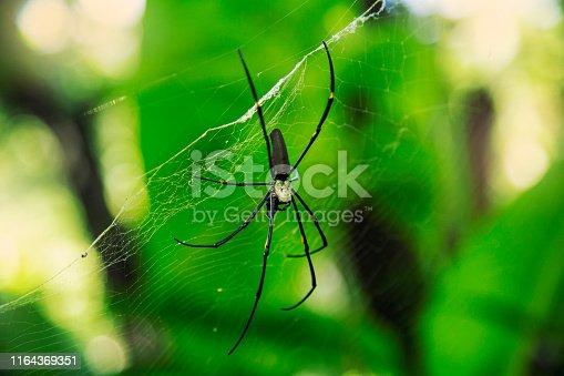 istock Spider net in forest 1164369351