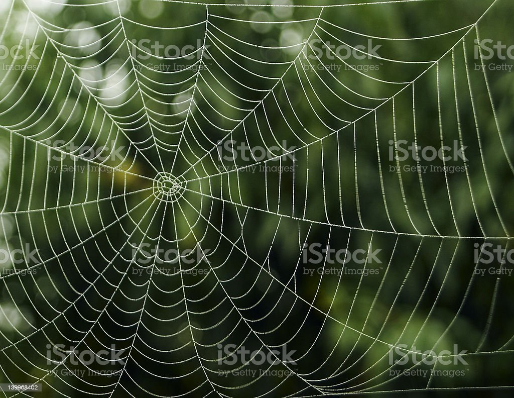 Spider net stock photo