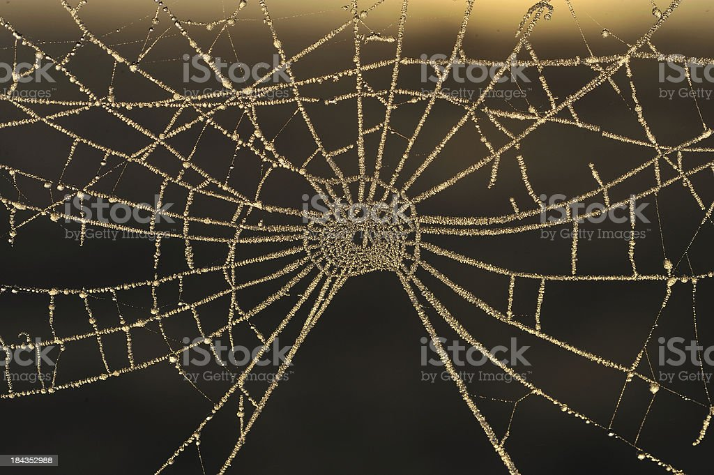 Spider net, stock photo