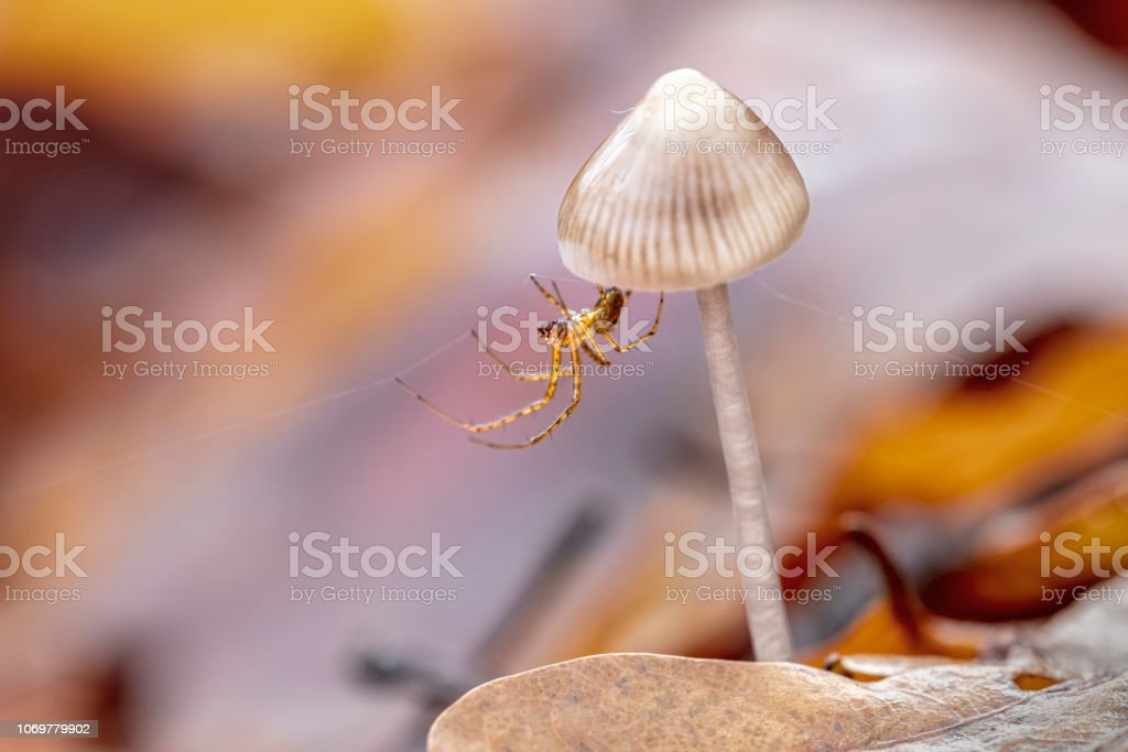Spindel på en svamp bildbanksfoto