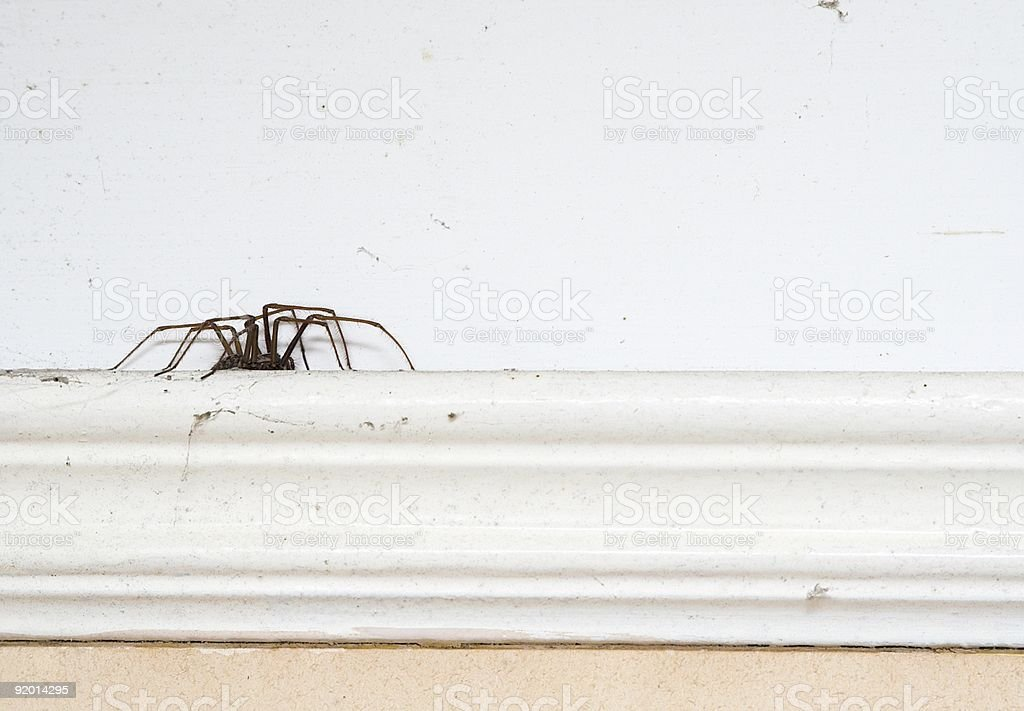 Spider On A Picture Rail stock photo