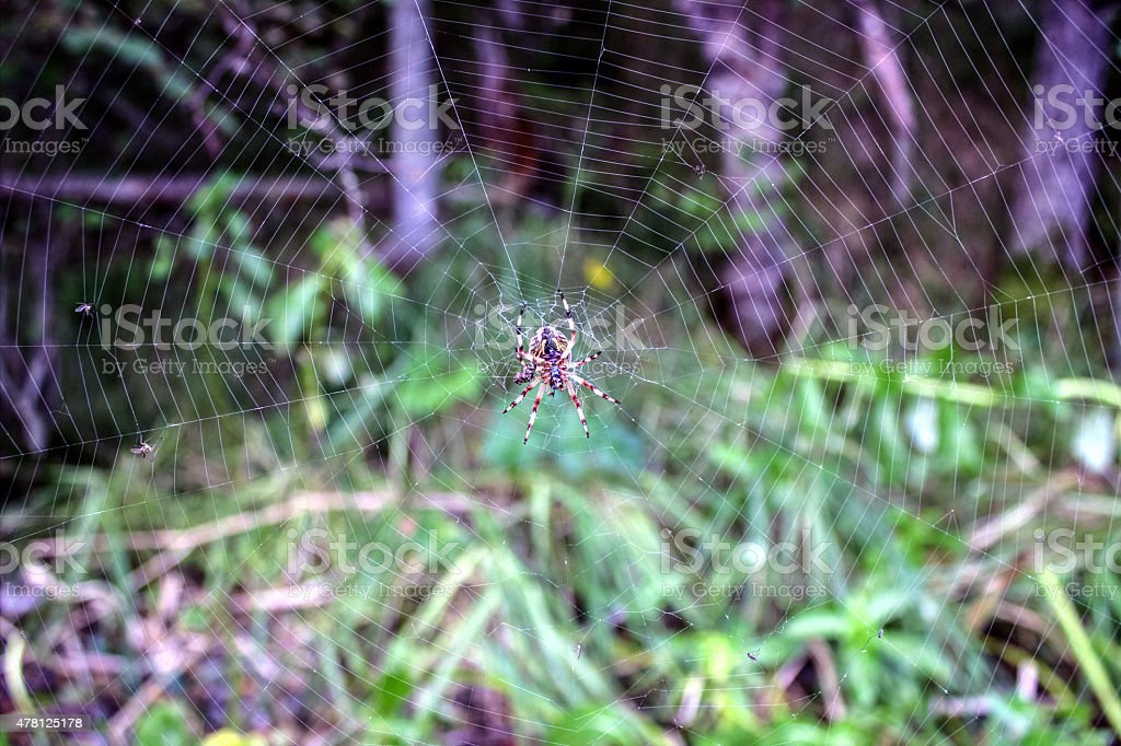 spider on a spider web stock photo