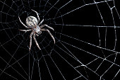 A DSLR photo of a spider on his web on a black background.