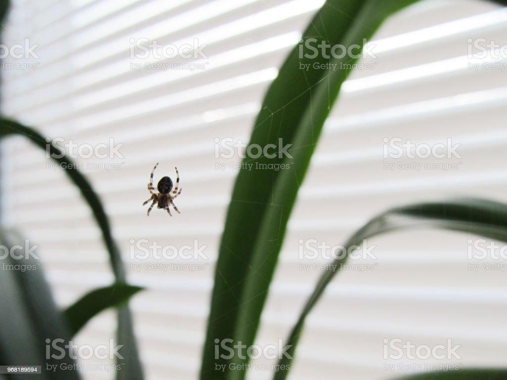 Uma aranha em uma janela em uma web - foto de acervo