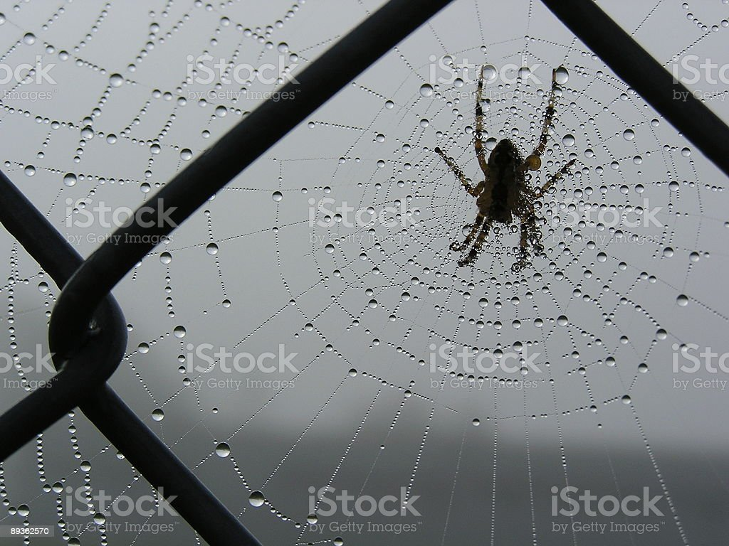 Spider on Fence Web in Morning Dew royalty free stockfoto
