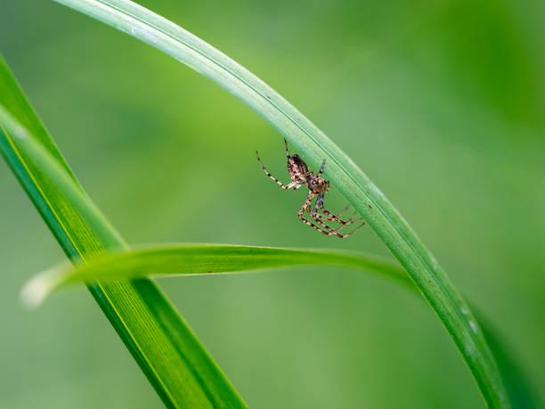 Spinne auf Grün Blatt – Foto