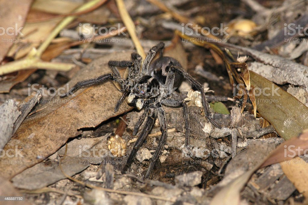 Spider on ground in wild stock photo