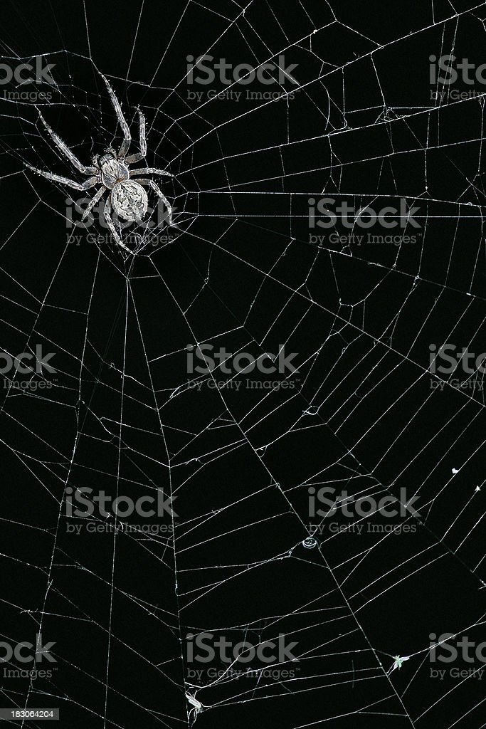 Spider on his web stock photo