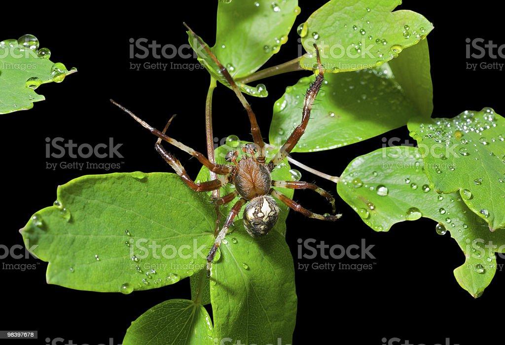 족두리 on 잎 royalty-free 스톡 사진