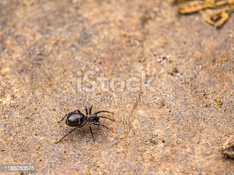 A small black spider is viewed up close as it crawls across a stone surface. In a forested area, the rock is dusted with particles of sand and has some fallen leaves visible at the edges of the frame.