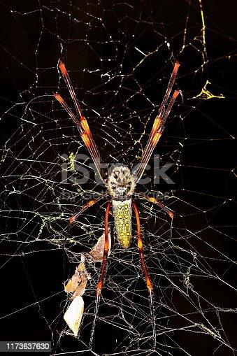 Spider on spider web (black background)