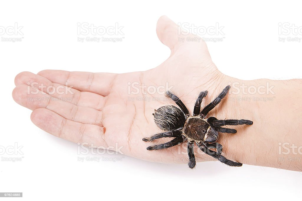 Spider on the hand royalty-free stock photo