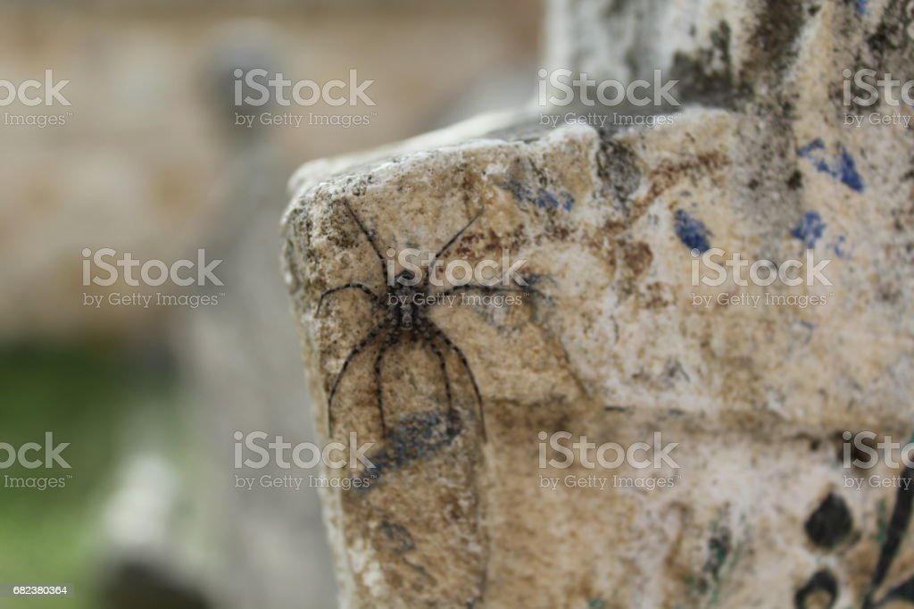 A spider on the historical gravestone royalty-free stock photo
