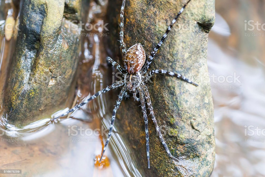 Spider on the rock in the waterfall stock photo