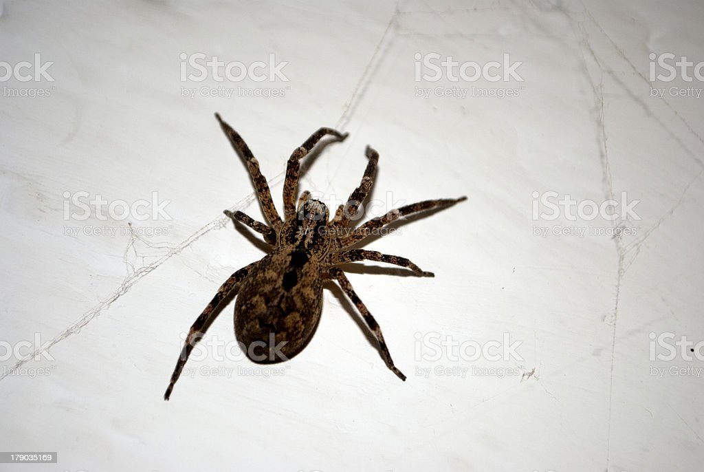 spider on the wall stock photo