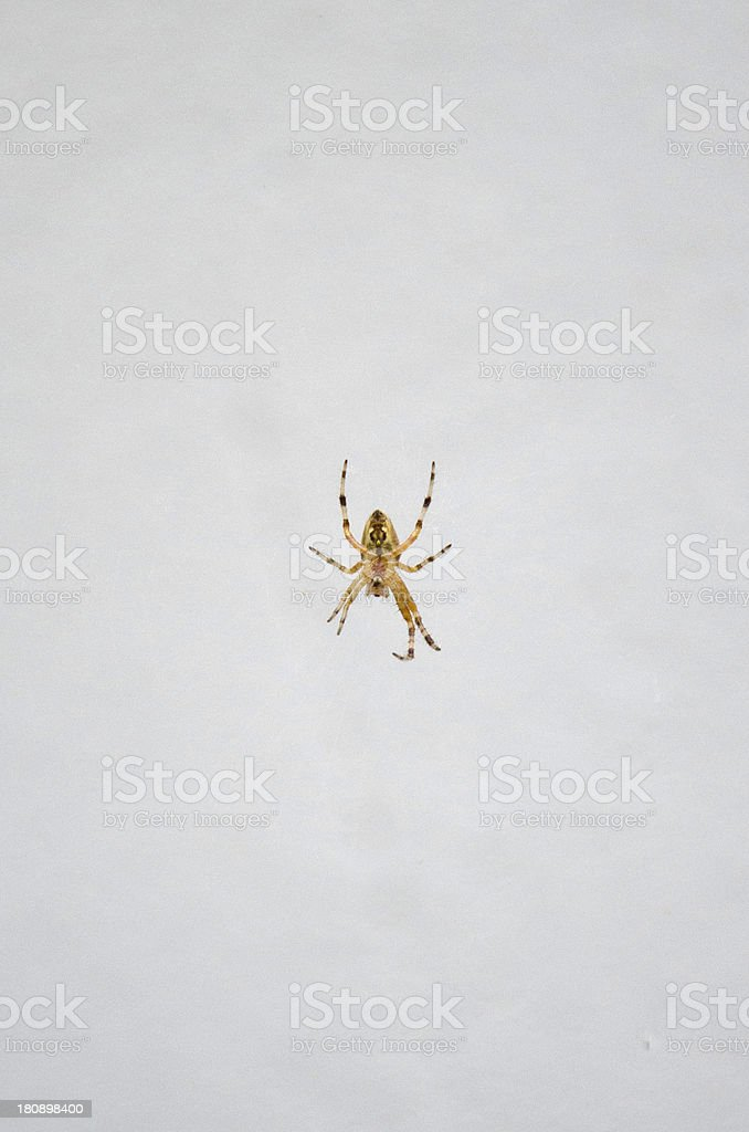 Spider on the wall royalty-free stock photo