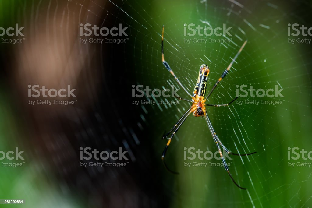 spider on the web in the forest, insect and animal