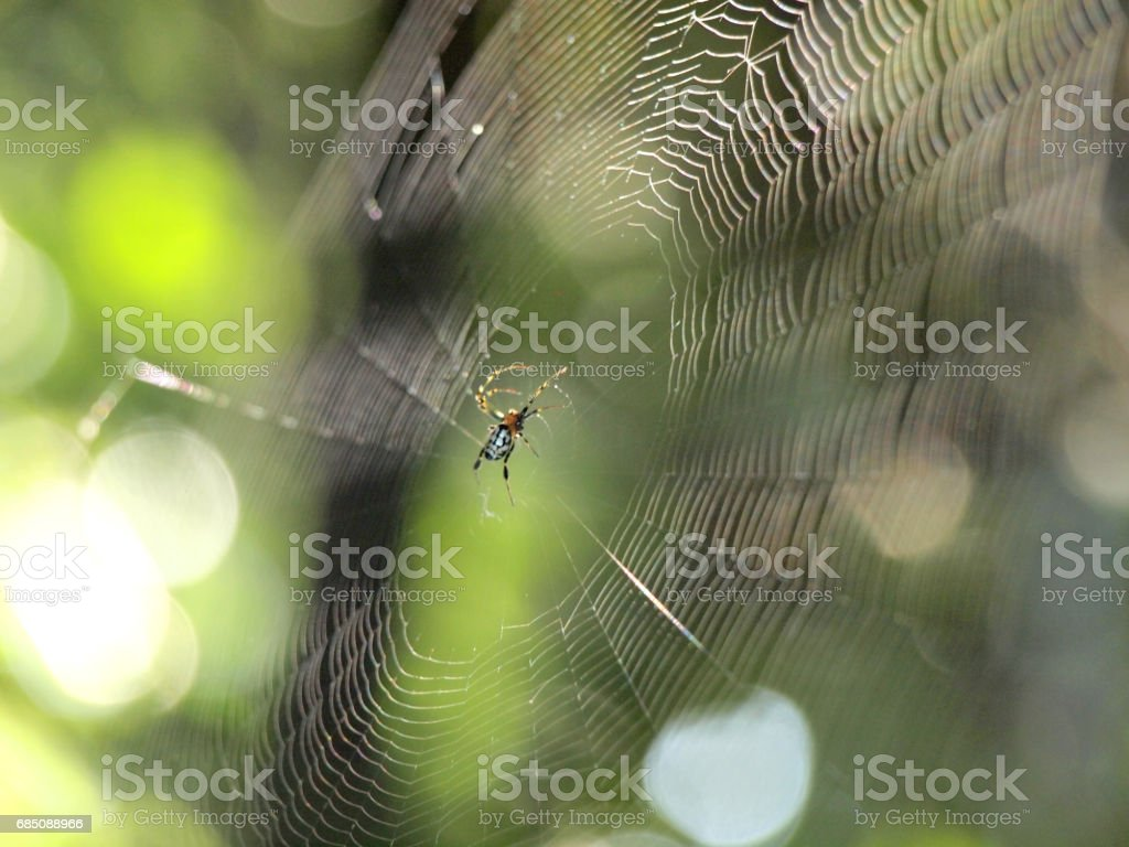 Spider on the web royalty-free stock photo