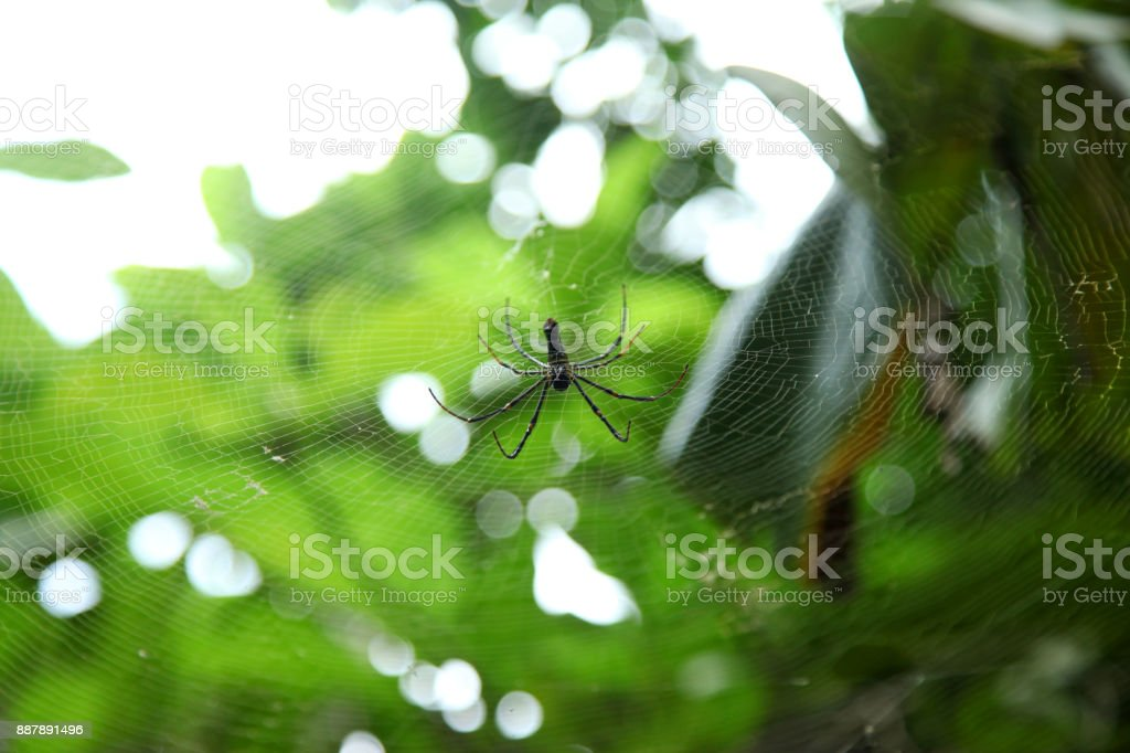 spider on the web, top view stock photo