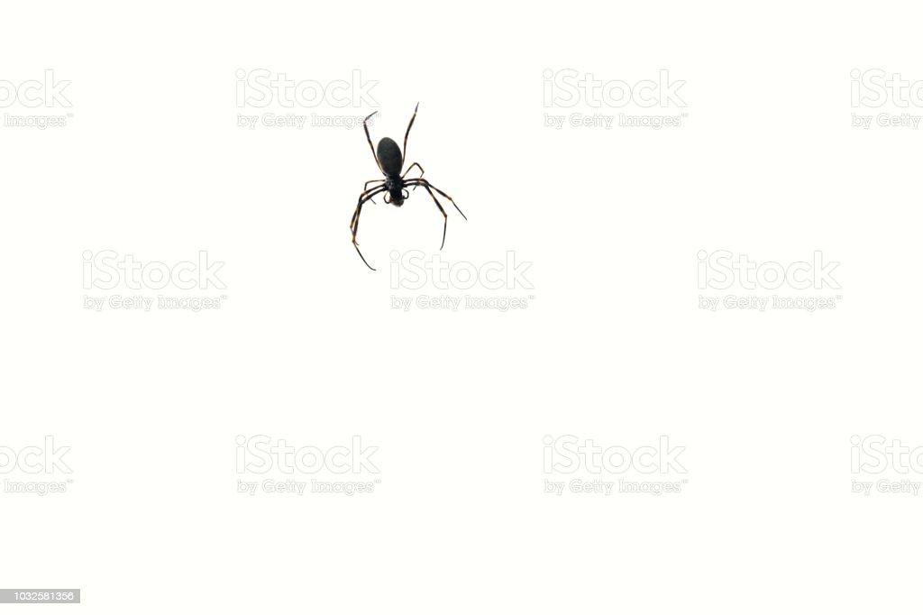 Spider on transparent background stock photo