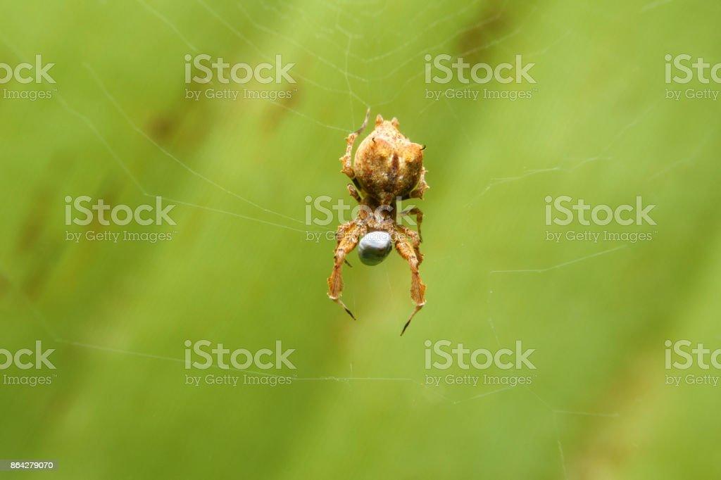 Spider on web eatting royalty-free stock photo