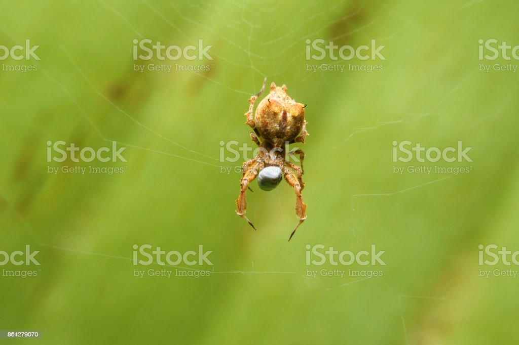Spider on web eatting stock photo