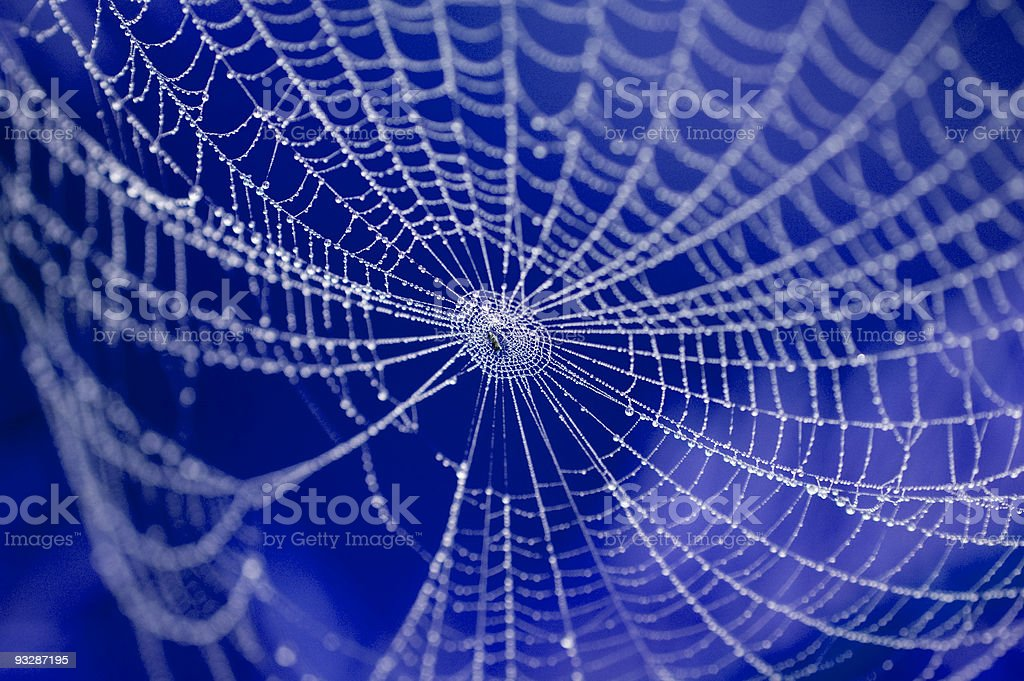 web spider auf Lizenzfreies stock-foto